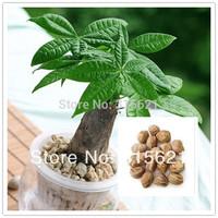 10pcs Bonsai Pachira Aquatica Macrocarpa Seeds Money Tree Seed Beautiful Health Plants For Home Free Shipping