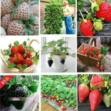 seeds fruit reviews