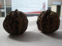 Shennongjia wild walnut man playing walnut fitness lion head heart-shaped hat walnut