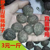 Wild pecan seeds walnut seeds xiaomiao