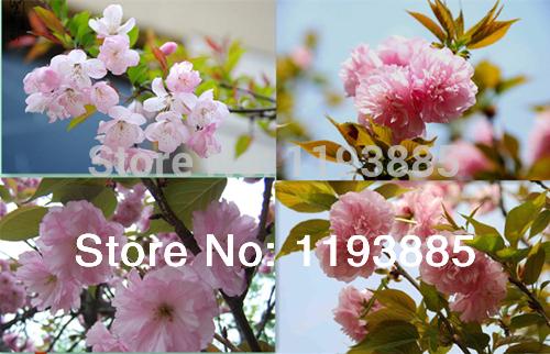 Карликовое дерево China flower 30pcs DIY TB020A карликовое дерево seed 100 30pcs