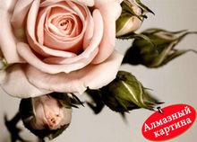 wholesale photo pink