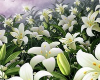 1pcs/bag the lily flower seeds white for DIY home garden Free shipping