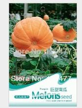 Giant pumpkin seeds, large pumpkin, fruit vegetable seeds - 5 particles(China (Mainland))