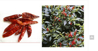 20gr - WHOLE CAYENNE PEPPER - PIRI-PIRI - ( DRIED ) - CHILLI PFEFFER SCHOTEN