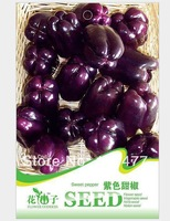 Purple sweet pepper seeds, pepper, vegetable seeds - 8 particles