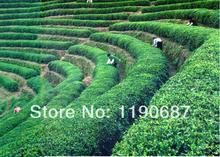 2014 new 250g early spring organic green tea China Huangshan Maofeng tea Fresh the Chinese green