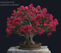 400 ORIGINAL PACKS HEIRLOOM SEEDS CRAPE MYRTLE * BONSAI FLOWER SEEDS