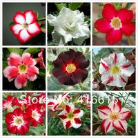 90 Pcs Mix Seeds 9 Adenium Species Absorption Of Formaldehyde Colorful Bonsai Desert Rose Flower Seeds,Plus Mysterious Gift