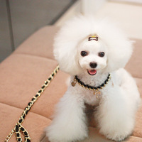 Free Shipping 2014 New Fashionable Dog Supplies Traction Rope Suits Pet Dog Cat Suits Two Colors(White/Black)