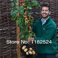 100 SEEDS - Fresh Rare TomTato Tomato Seeds ~ Bonsai Fruit vegetables seeds * Free Shipping