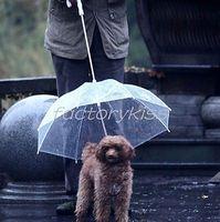 Free Shipping Clear Pet Umbrella High Quality Plastic Transparent Dog Umbrella [2 4004-739]
