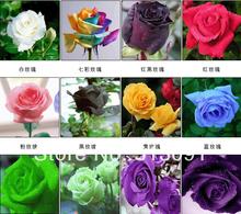 wholesale rainbow rose