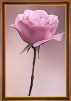 Free shipping DIY Diamond Painting pink roses C Rhinestone Cross Stitch Kits Diamond Embroidery Needlework Set