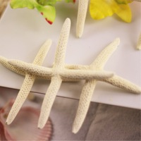 Natural lucky cross jesus Natural shell starfish in white