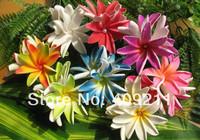NEW ARRIVAL !  FASHION FREE SHIPPING +  KL949 10x10 CM 3pcs FOAM Lily  HAIR CLAW W WHITE PEARLS +50PCS/LOT +8 COLORS + HAWAIIAN