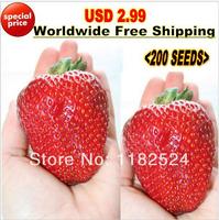 "USD 2.99 Worldwide Free Shipping 200pcs ""Giant Strawberry"" Seeds Bonsai Four Season Fruit Seeds"