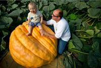 Free shipping 50pcs/lot super big Pumpkin Seeds DIY home garden pumpkin seeds vegetables