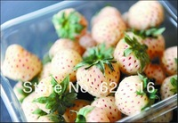 "60pcs/lot original packaging white strawberry seeds ""white lover"" "" snow rabbit""  strawberries fruit seeds garden balcony seeds"