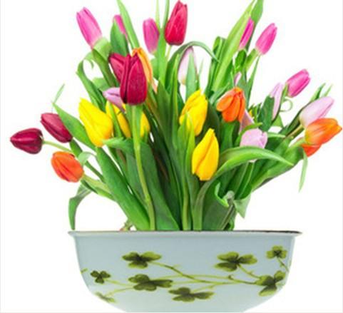 la plantation des tulipes en pot magasin darticles promotionnels 0 sur aliexpress