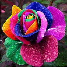 rose seed price