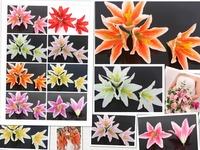 wholesale 10cm 10 pcs/lot mixed color artificial silk lily head flowers decorative flowers wedding decoration flower supplier