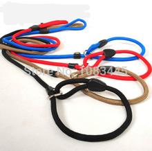 popular slip collar dog