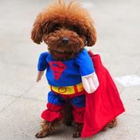 Puppy / Big Pet Dog Cotton Superman Clothes , Halloween Apparel Costumes Outfit Suit Cat Dog Clothing 1pcs/lot