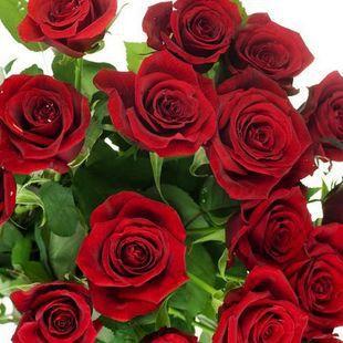 $1 get 50pcs*1pack Seeds China Rare red Rose Flower(China (Mainland))