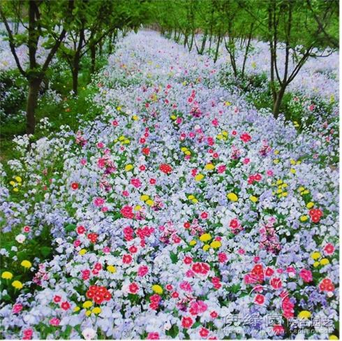 Flower Plants For Home Garden Mix Flower Home Garden