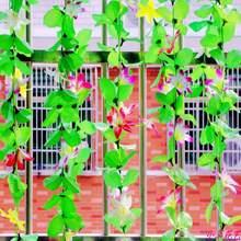 popular rattan plant
