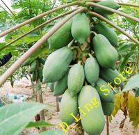 Free Shipping 1 Bag of China Floweringquince seeds* 6 Seeds per Bag Papaya seeds