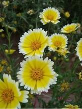 pet plant promotion