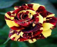 Rose flower seeds RARE(200+)ABRACADABRA ROSE SEEDS ROSE STRIPED^Gorgeous!