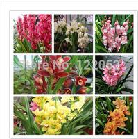 Potted flowers orchid seeds, Cymbidium seeds, cicada orchid, Cymbidium when flowering,50pcs