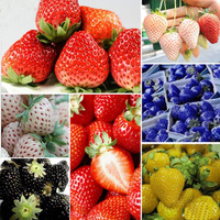 Hot Selling  1000pcs  Rare Delicious Strawberry Seeds Vegetables Fruits Seeds New Free Shipping
