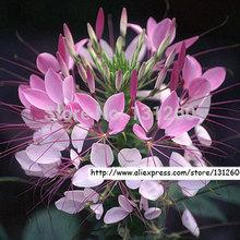 flower heat promotion