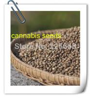 new 2014 20g hemp seeds herbal teas food supplement best marijuana seed cannabis sativa seeds