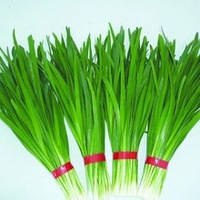 Mix order $5 free shipping leek  Seeds Allium tuberosum Rottl Garden Healthy Organic Vegetable Green  Seeds with gift