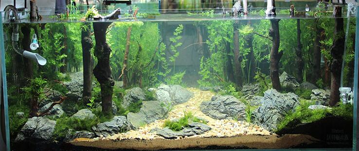décor aquarium hobby