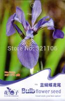 5 Packs, 25 Blue Iris Seeds, each pack 5 seeds---free shipping