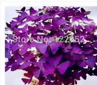 Purple clover, purple butterfly, clover, purple leaf shamrock seeds, office desktop indoor potted flowers, 100pcs