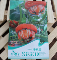Drop shipping 1 Pack 5 Seed Of Odd Shape The White Stripes Orange Pumpkin Seeds