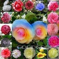 Flower pots planters rainbow camellias seeds multicolor camellia tree seeds Bonsai plants Seeds for home & garden