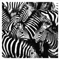 Canvas prints African animals art oil painting, beautiful black and white zebras paintings printed on canvas Free shipping