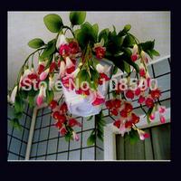 Fuchsia flower  fuchsia seed crabapple lantern flowers potted indoor balcony Bonsai (20 pieces/lot)