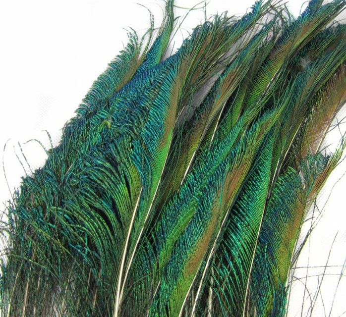 Peacock Feathers Quotes 12 Natural Peacock Feather