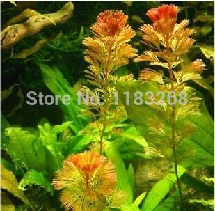 150seeds/bag Aquarium Grass Seeds Water Aquatic Plant Seeds Easy to grow for choose(China (Mainland))