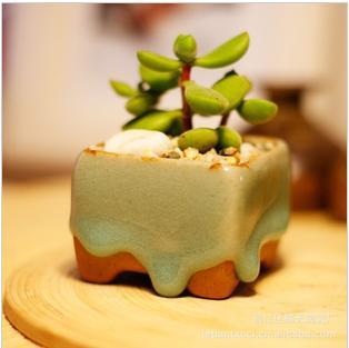 Venta al por mayor suculentas ollas carnosa planta for Suculentas por mayor