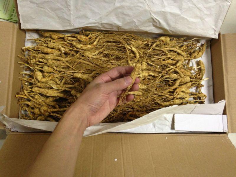 Wild Ginseng Plant Wild Ginseng Root 10 15